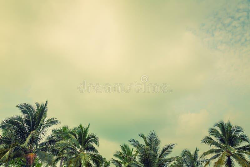 Kokospalm (Gefiltreerd beeld verwerkt uitstekend effect royalty-vrije stock afbeelding