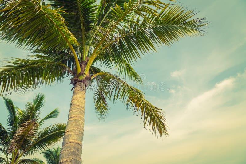 Kokospalm (Gefiltreerd beeld verwerkt uitstekend effect ) stock afbeelding