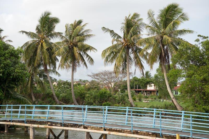 Kokospalm i byn arkivfoton