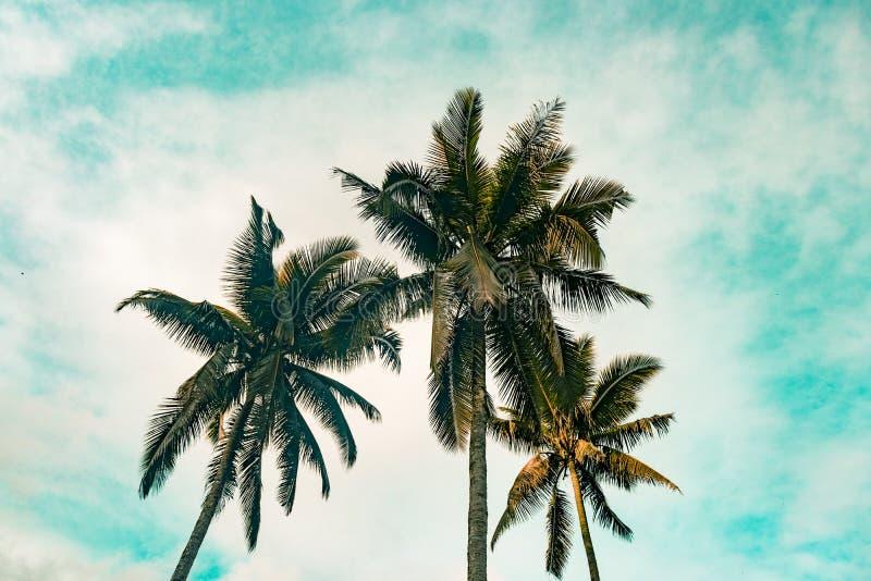 Kokospalm i Filippinerna royaltyfri fotografi