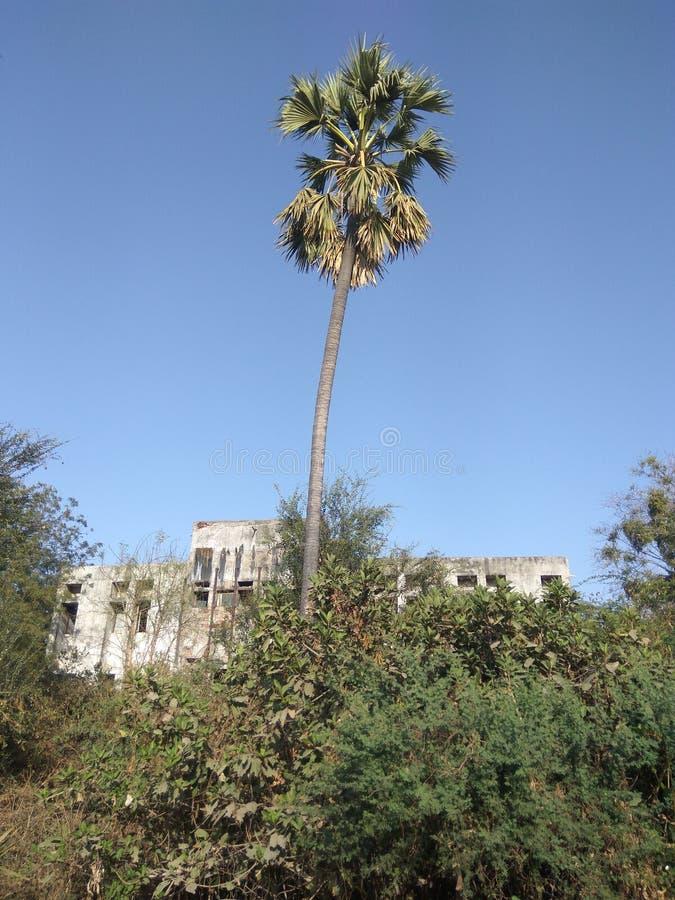 Kokospalm i konkret djungel arkivbilder