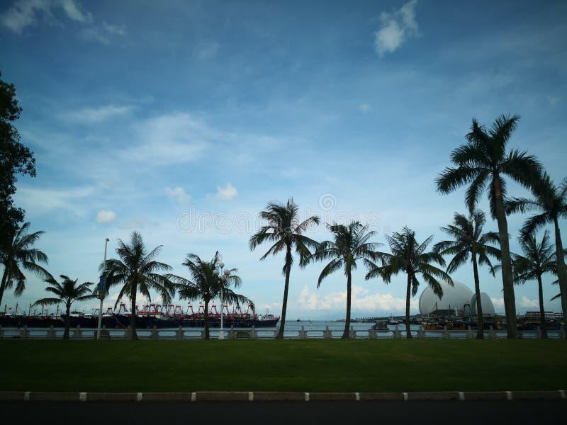 Kokospalm i solig dag arkivbilder
