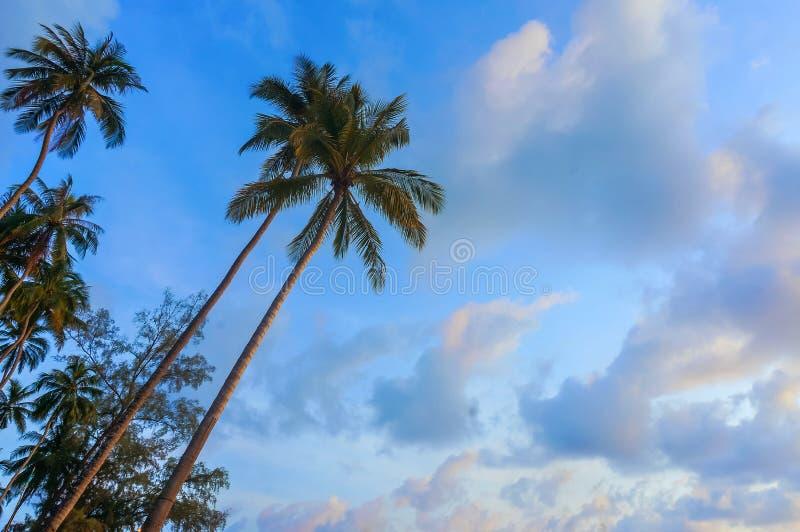 Kokospalm med solnedgångljus royaltyfri fotografi