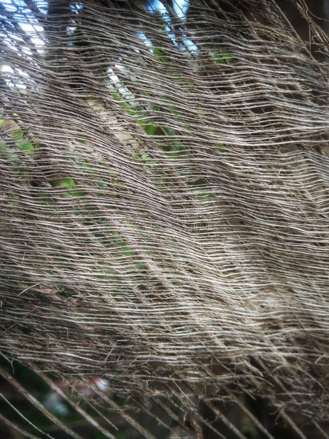Kokospalm met een blad en een bewolkte achtergrond royalty-vrije stock afbeelding