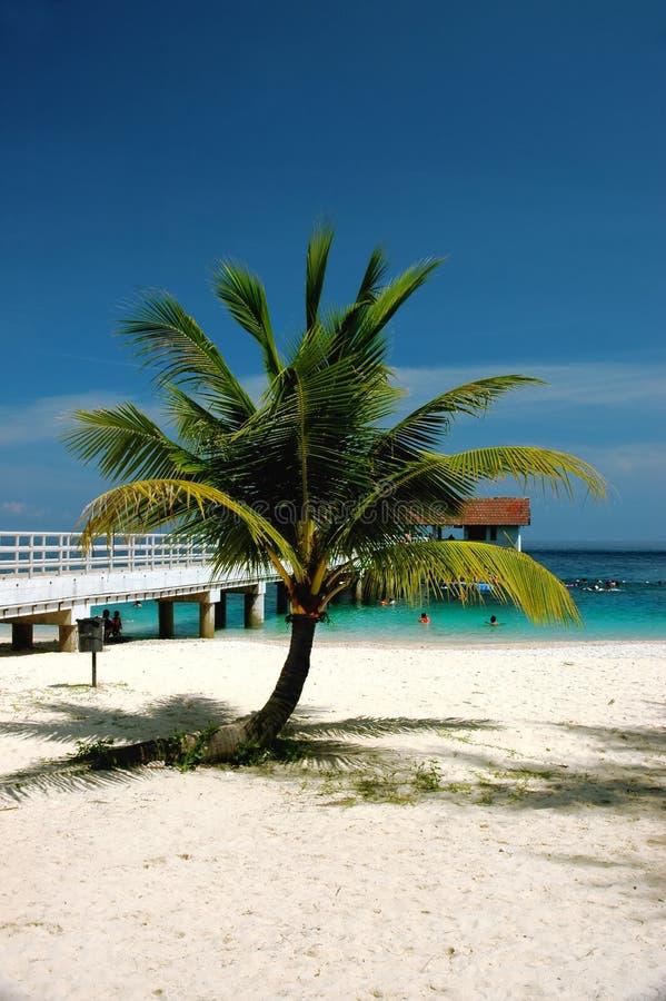 Kokospalm met pierachtergrond stock afbeeldingen