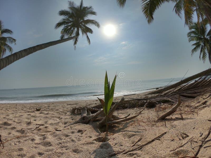 Kokospalm naast het strand royalty-vrije stock foto's