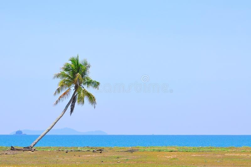 Kokospalm onder blauwe hemel bij het strand van overzees het Zuid- van China met stock fotografie