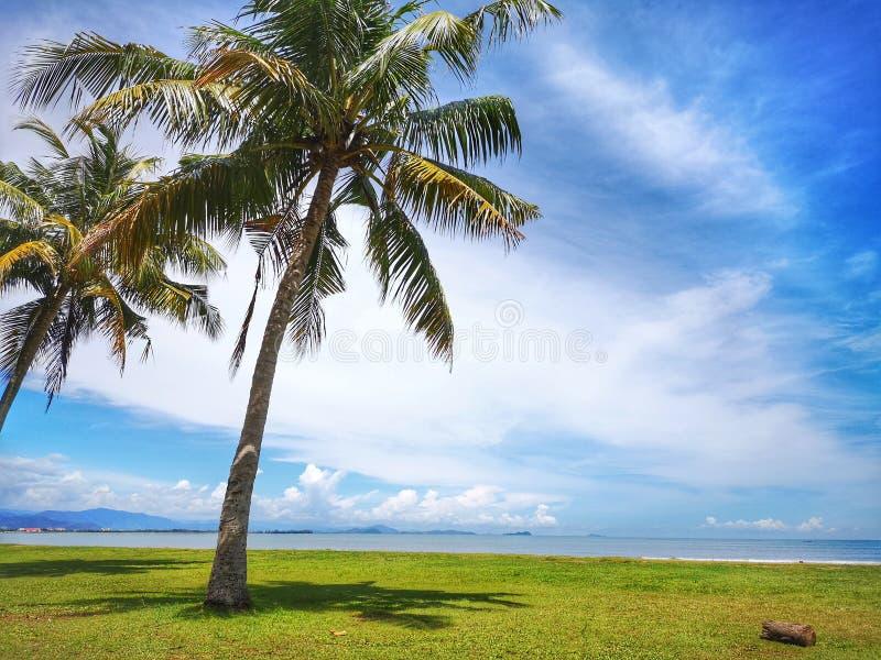 Kokospalm op het Strand van Tanjung Aru, Kota Kinabalu met de mooie blauwe hemel hierboven op zonnige dag royalty-vrije stock foto