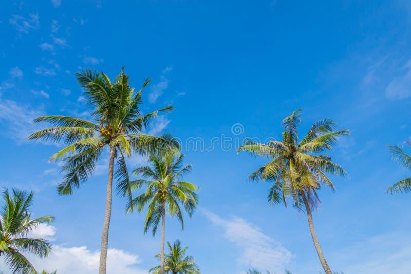Kokospalm over blauwe hemel royalty-vrije stock fotografie