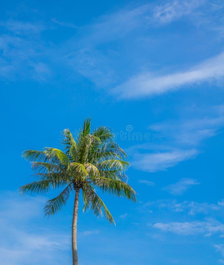 Kokospalm over blauwe hemel stock afbeelding