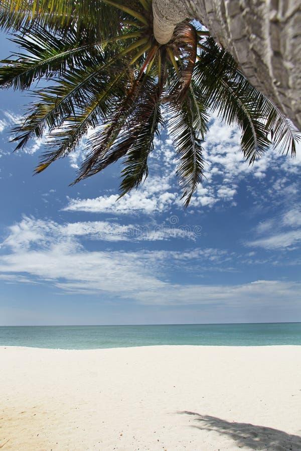 Kokospalm på en tropisk strand - serie 2 royaltyfria bilder