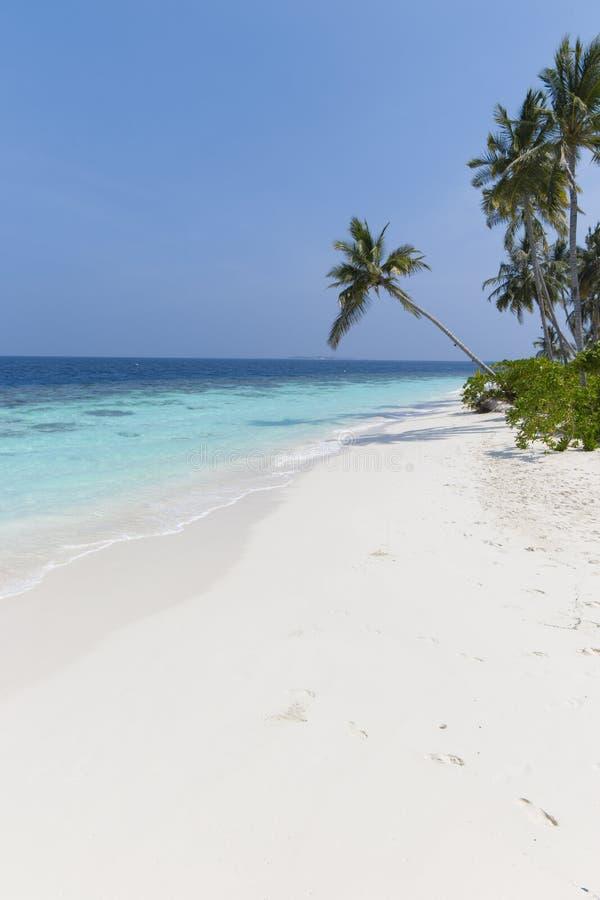 Kokospalm p? en vit sandig strand och ett kristallklart vatten i Maldiverna arkivfoton
