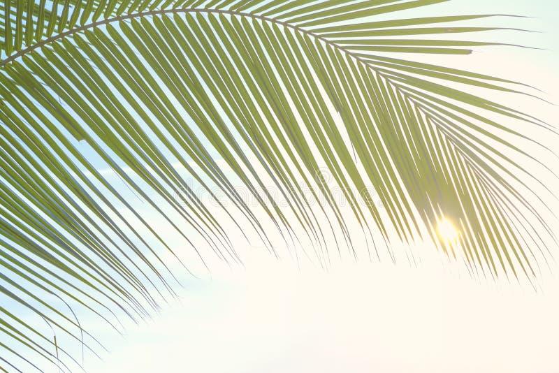 Kokospalmbladeren stock afbeeldingen