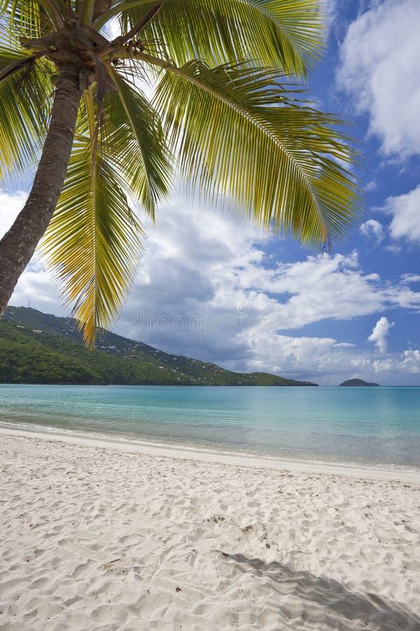 Kokospalmen bij een tropisch strand royalty-vrije stock foto