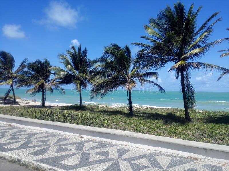 Kokospalmen bij het strand stock foto