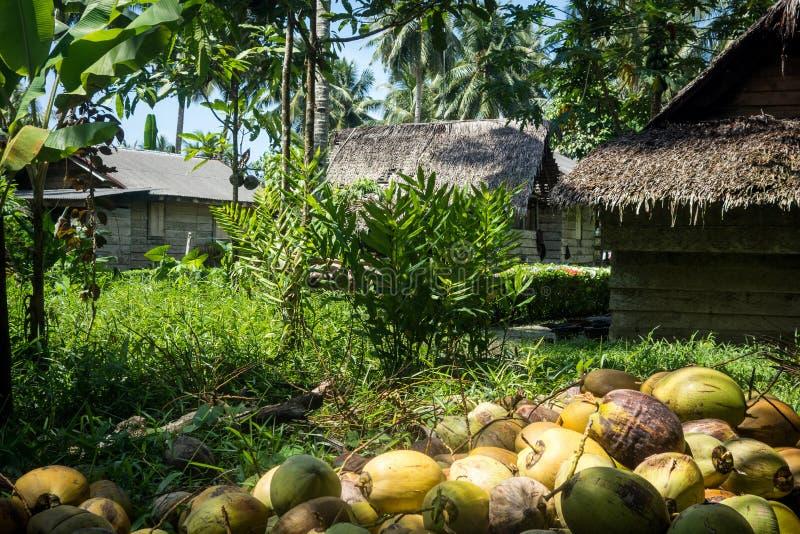 Kokospalmen en lokale huizen royalty-vrije stock fotografie