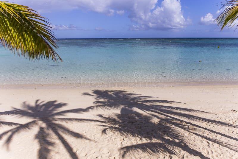 Kokospalmen en parasols in het eiland van Mauritius stock foto