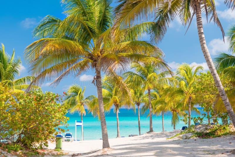 Kokospalmen en wit zandig strand in Cuba royalty-vrije stock fotografie