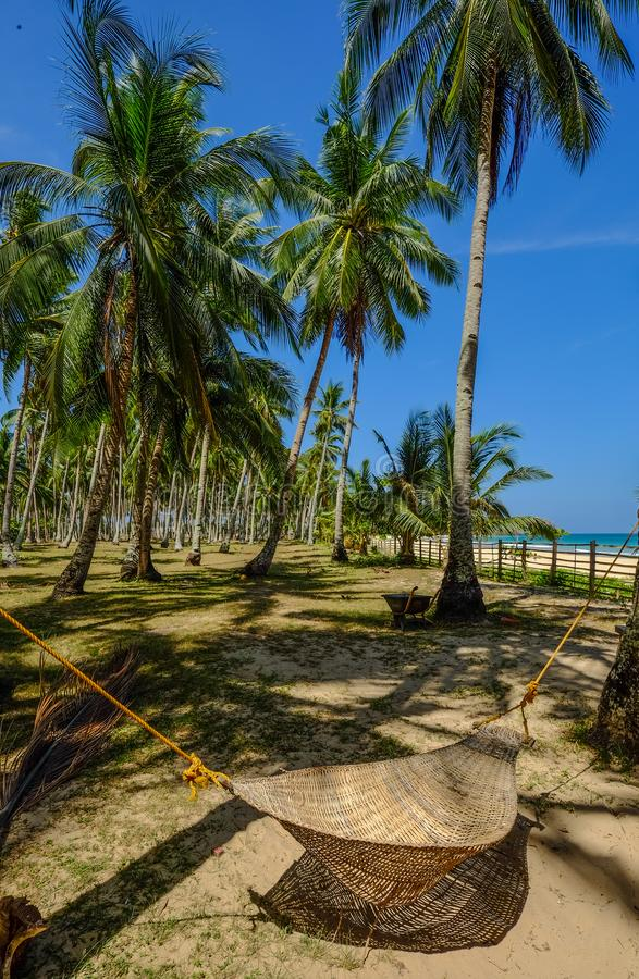 Kokospalmen onder Blauwe Hemel stock fotografie