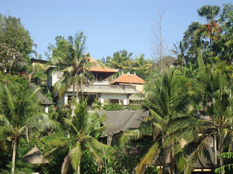 Kokospalmer döljer villan royaltyfri foto