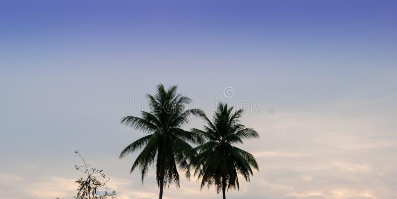 Kokospalmer ljus himmelbakgrund royaltyfria foton
