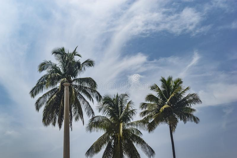 Kokospalmer på en bakgrund för blå himmel/en konkret unngle arkivfoto
