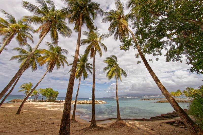 Kokospalmer på Pointe du Anfall sätter på land - Les Trois Ilets - Martinique arkivbilder