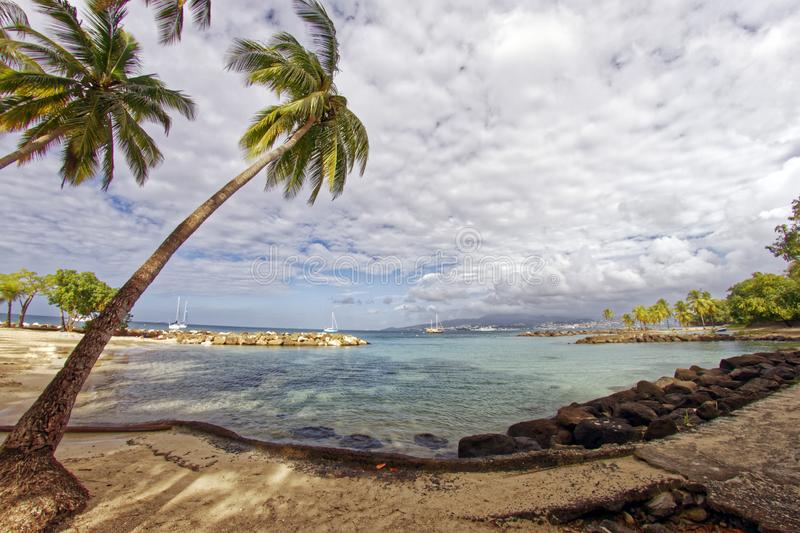 Kokospalmer på Pointe du Anfall sätter på land - Les Trois Ilets - Martinique royaltyfri foto