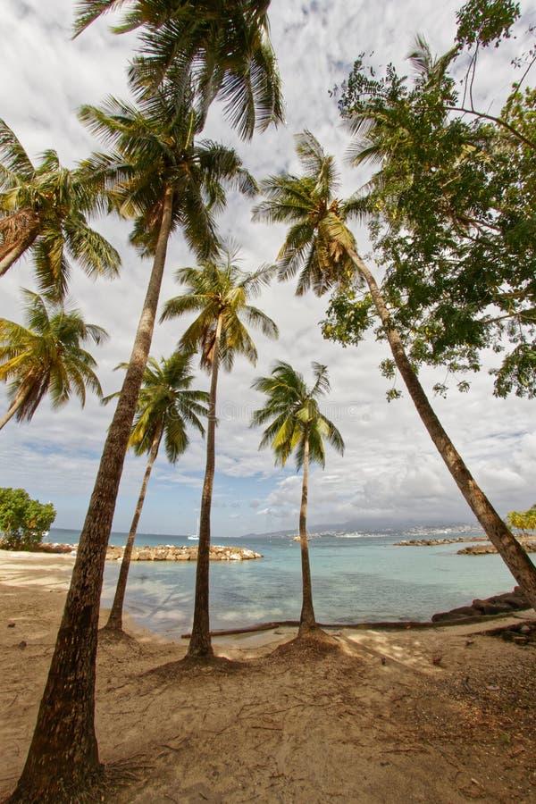 Kokospalmer på Pointe du Anfall sätter på land - Les Trois Ilets - Martinique arkivfoto
