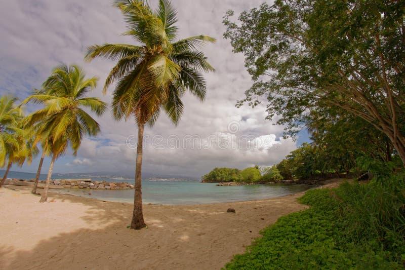 Kokospalmer på Pointe du Anfall sätter på land - Les Trois Ilets - Martinique royaltyfri bild