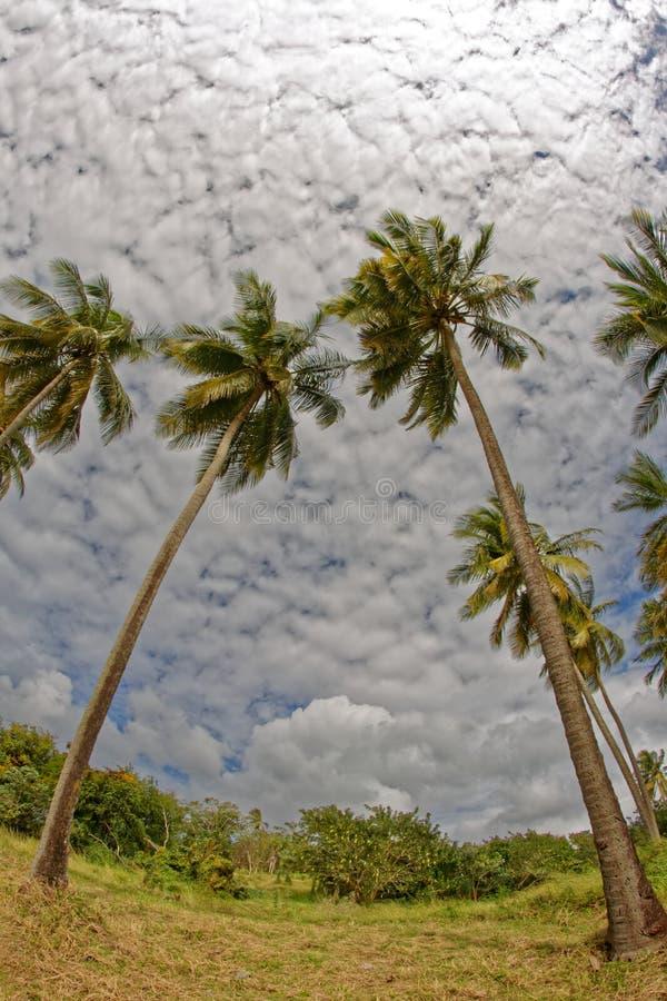 Kokospalmer på Pointe du Anfall sätter på land - Les Trois Ilets - Martinique royaltyfri fotografi