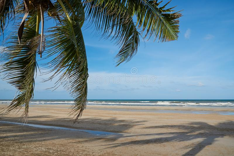 Kokospalmer på stranden mot bakgrund för blå himmel och moln arkivbild