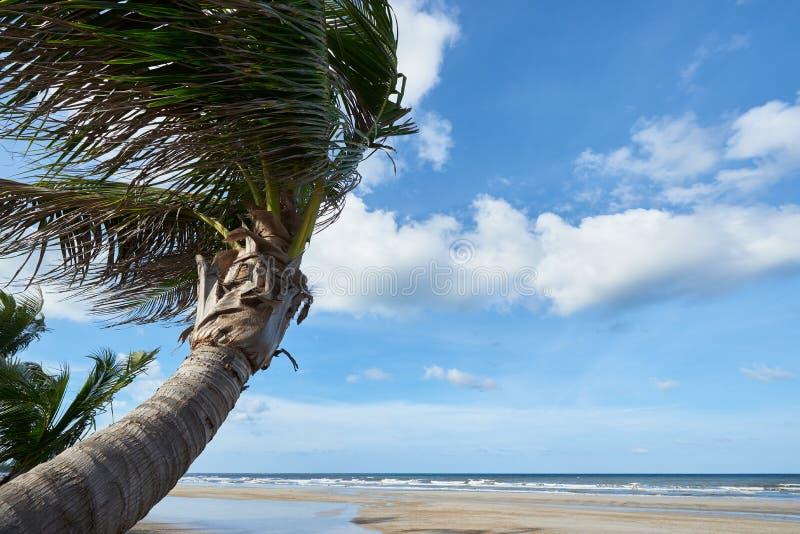 Kokospalmer på stranden mot bakgrund för blå himmel och moln arkivfoto