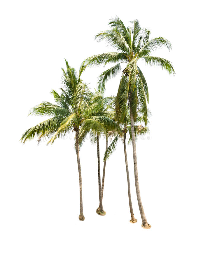Kokospalmer som isoleras på vit royaltyfri foto