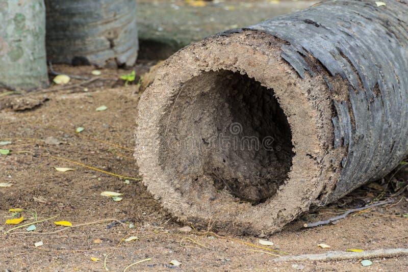 Kokospalmhål royaltyfria bilder