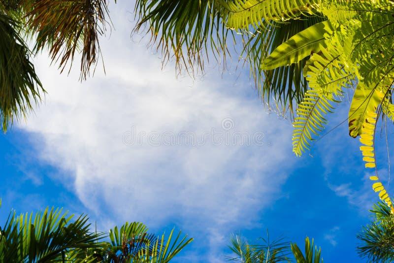Kokospalmkader royalty-vrije stock afbeeldingen