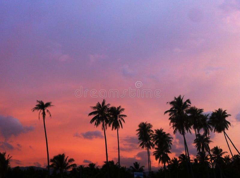 Kokospalmsilhouet als zonlicht van zonsondergangachtergrond royalty-vrije stock afbeelding