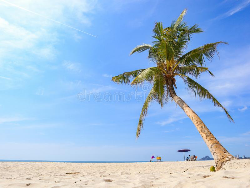 Kokosträd på stranden arkivbilder