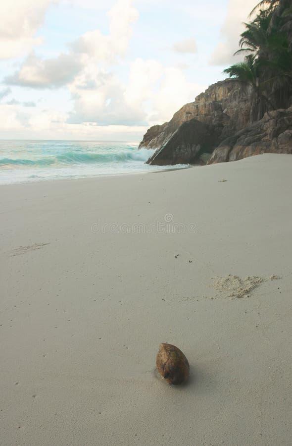 kokosy na plaży obrazy stock