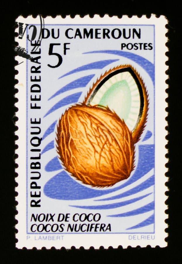 Koks - Cocos nucifera około 1967, obrazy royalty free
