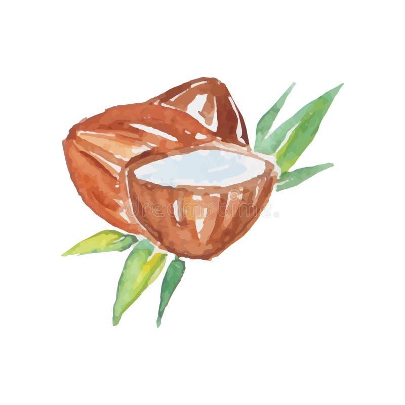 Koks kłaść na zielonych palmowych liściach Połówka coco z mlekiem Zdrowa tropikalna owoc Kolorowy akwarela obraz royalty ilustracja