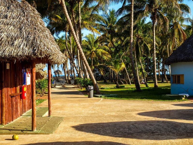 Koks pazy blisko plaży fotografia royalty free