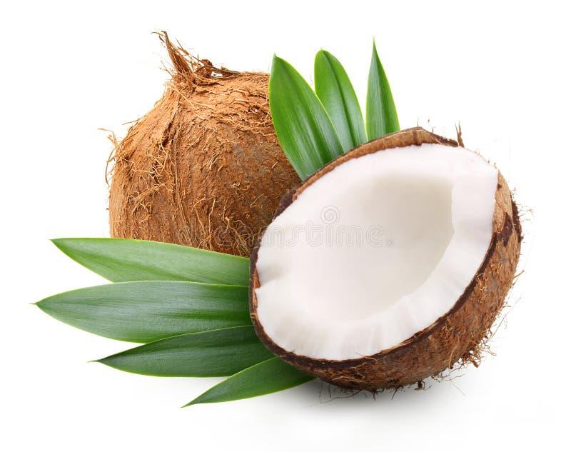 Koks z palmowymi liśćmi obraz stock
