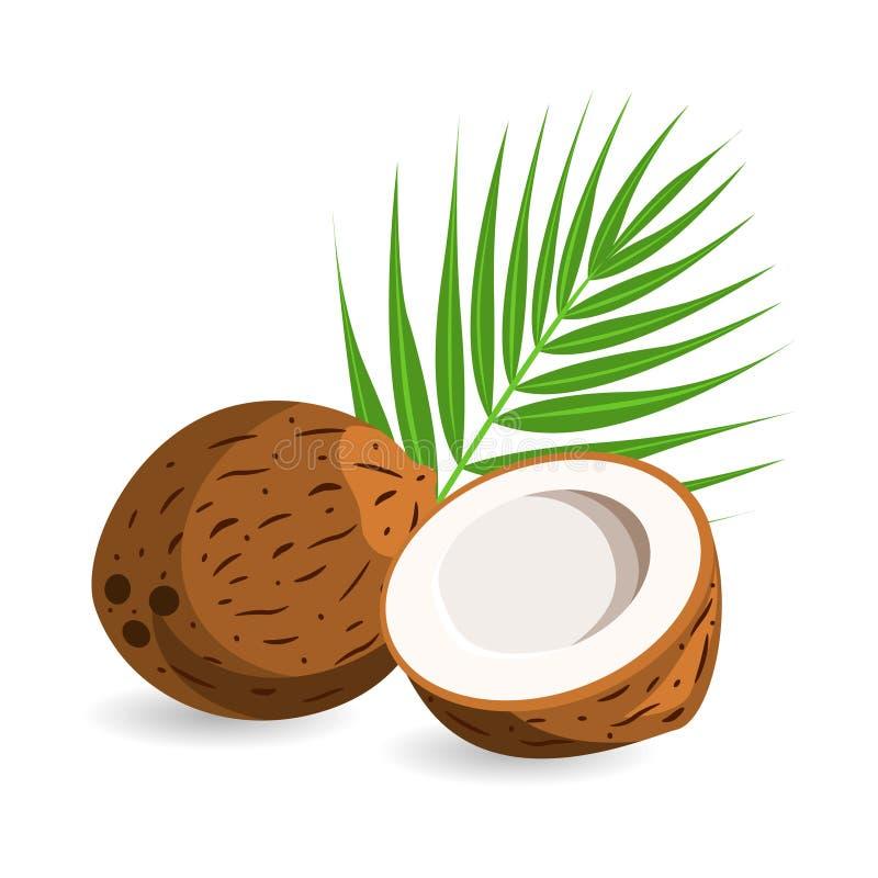 Koks z połówką i palma liśćmi pojedynczy białe tło royalty ilustracja