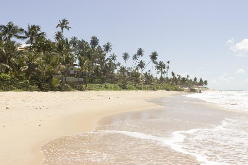 Koksu drzewko palmowe - Coqueirinho plaża, Conde PB, Brazylia zdjęcia stock