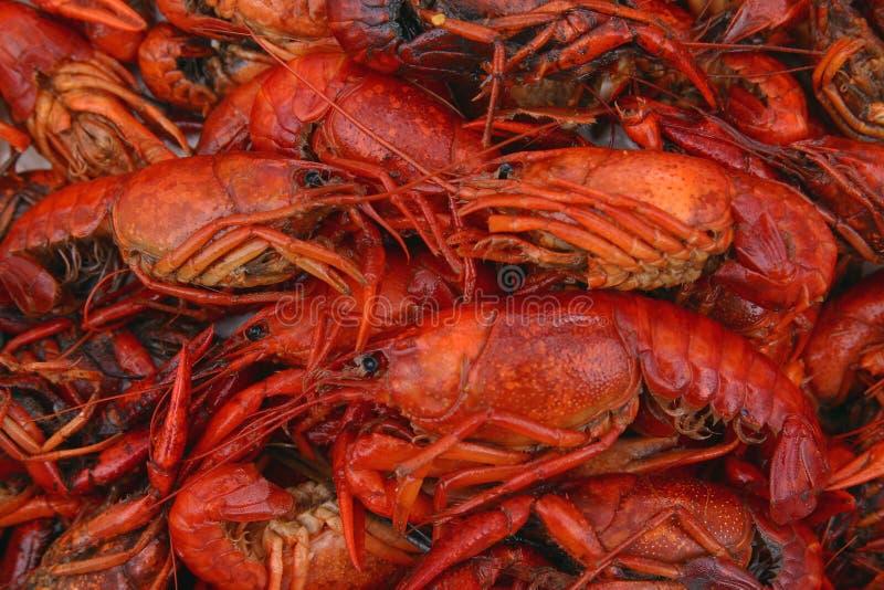 kokt täta crawfish upp royaltyfria foton