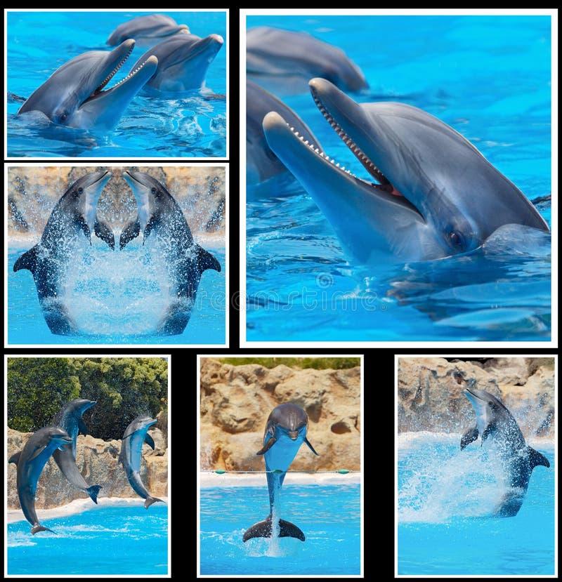 Kolaż fotografie delfiny w przedstawieniu obraz stock