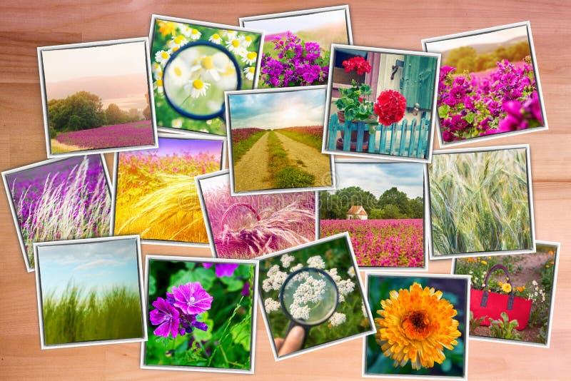 Kolaż fotografie kwiaty i łąki na drewnianym backgrou obrazy royalty free