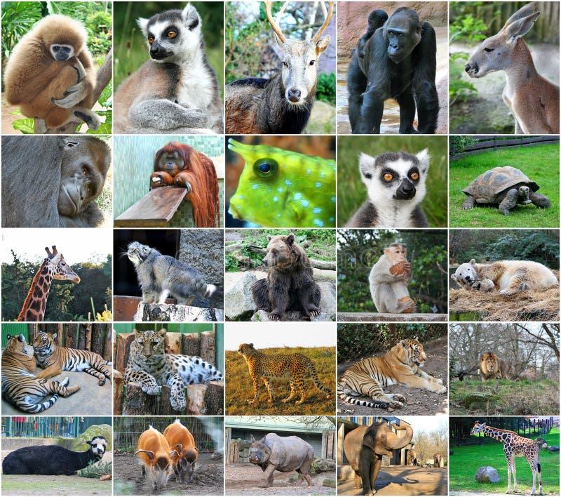 Kolaż fotografie niektóre dzikie zwierzęta zdjęcie stock
