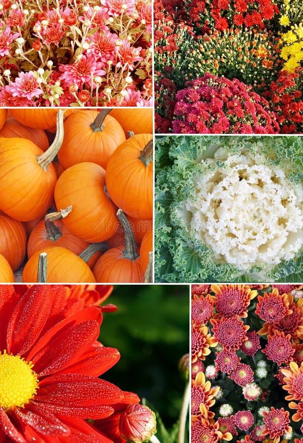 Kolaż fotografie spadków warzywa i kwiaty fotografia royalty free